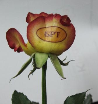 роза с корпоративной наклейкой